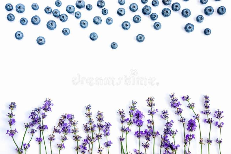 Flores e mirtilos frescos da alfazema em um fundo branco As flores e os mirtilos da alfazema zombam acima Copie o espaço fotos de stock royalty free