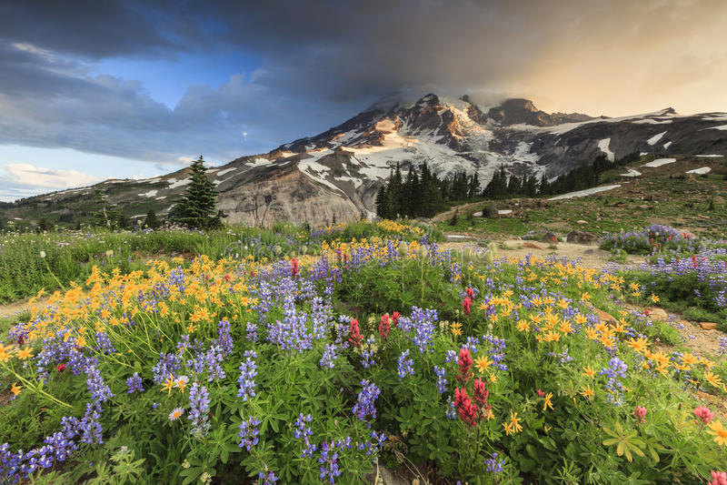 Flores e montanha fotos de stock