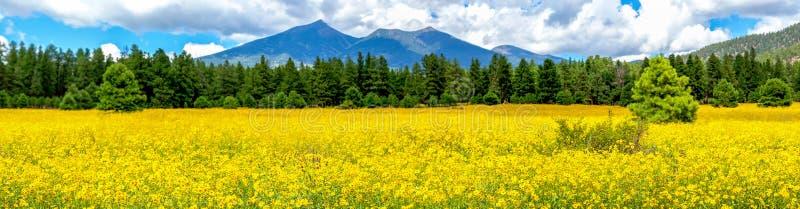 Flores e montanhas Panorama do campo do girassol mexicano foto de stock royalty free