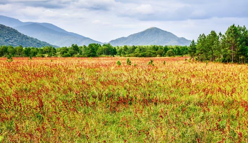 Flores e montanhas vermelhas fotografia de stock royalty free