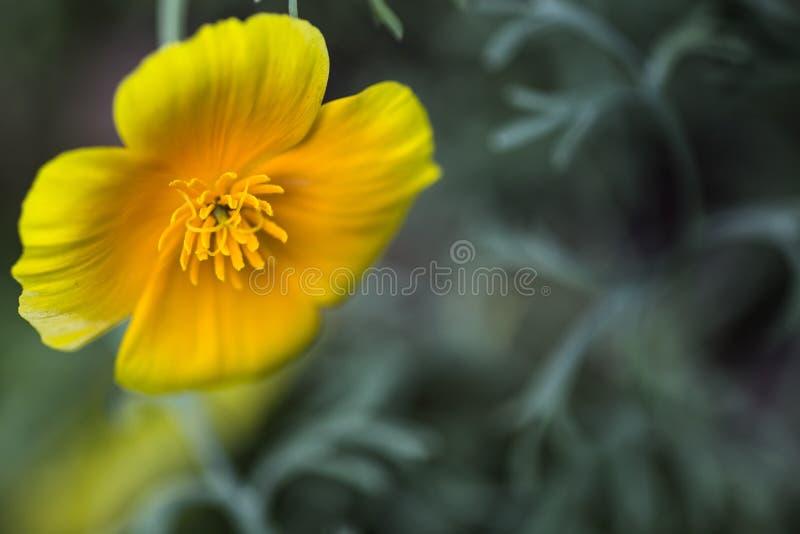 Flores e natureza macro imagens de stock royalty free