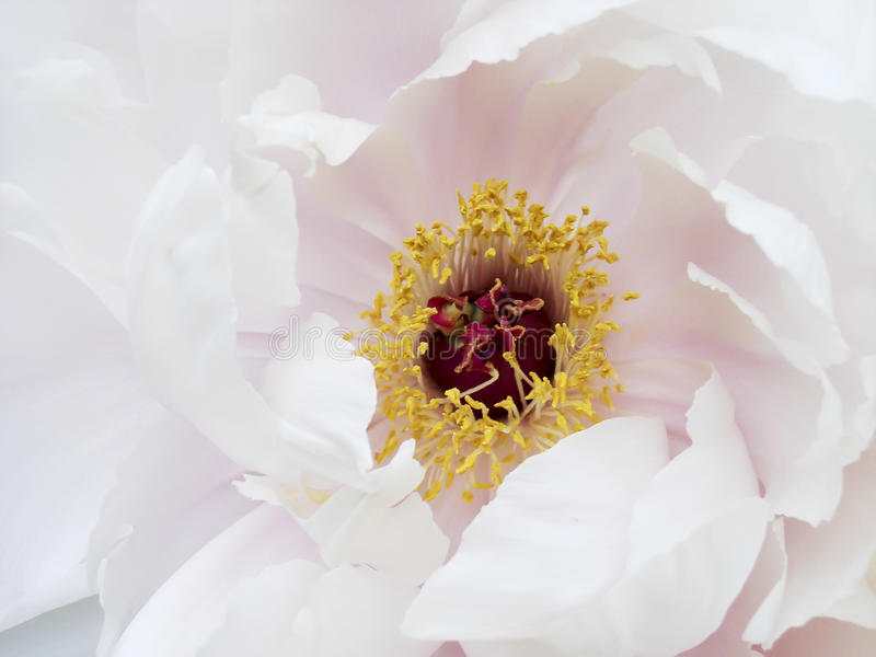 Flores e natureza macro fotografia de stock royalty free