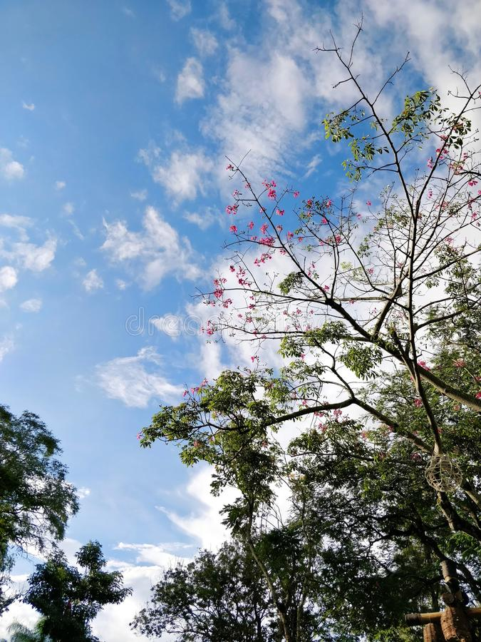 Flores e nuvens fotos de stock