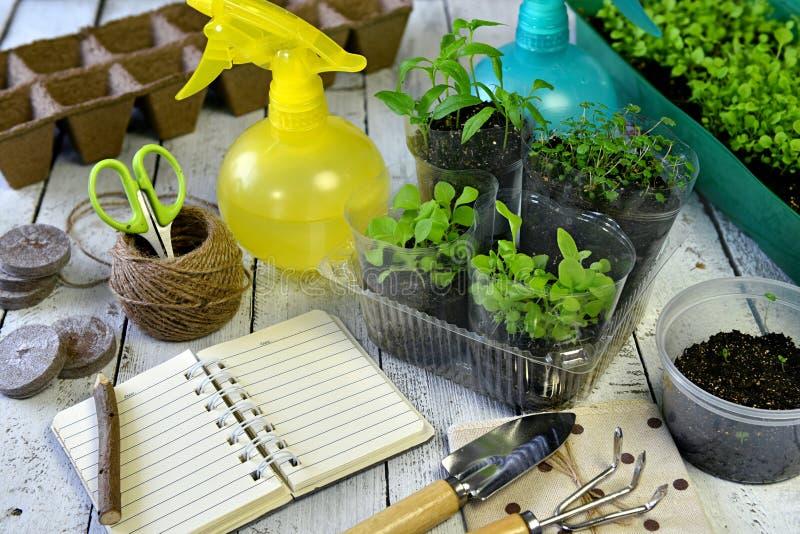 Flores e plântulas dos vegetais com ferramentas de jardim e o diário aberto em pranchas do vintage imagem de stock royalty free