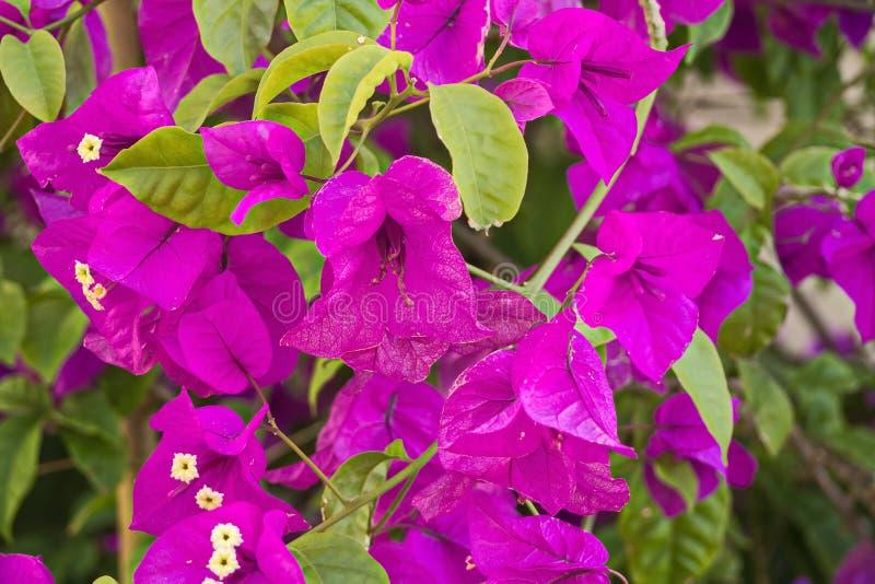 Flores e plantas em Peterhof imagem de stock