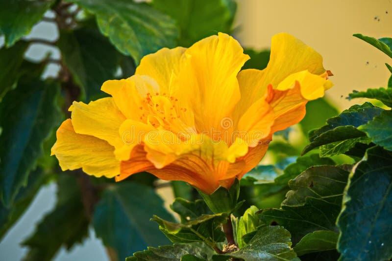 Flores e plantas em Peterhof fotos de stock royalty free
