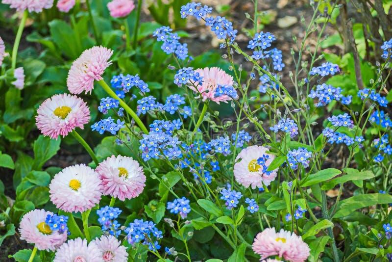 Flores e plantas em Peterhof foto de stock royalty free