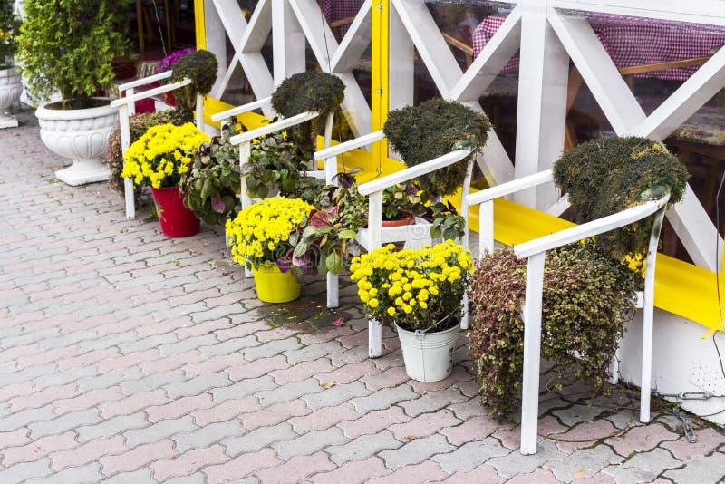 Flores e plantas em uns vasos de flores e em umas cubas no projeto fotografia de stock royalty free