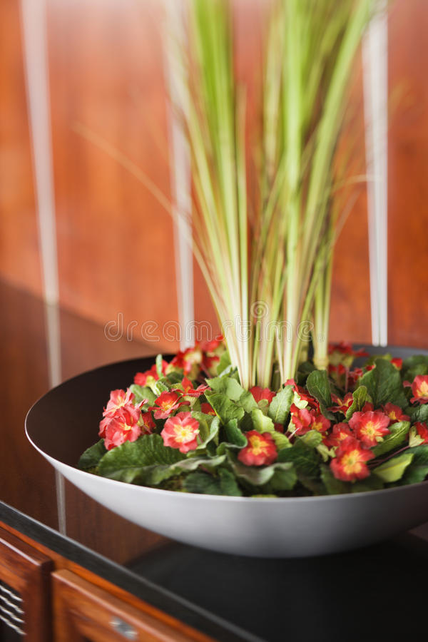 Flores e plantas na bacia preta fotos de stock