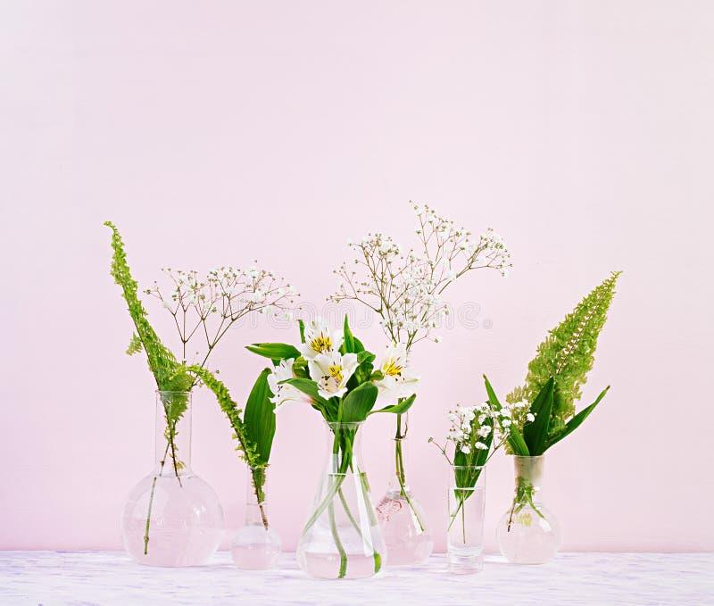 Flores e plantas na garrafa Fundo bonito da mola com as flores no vaso imagem de stock royalty free