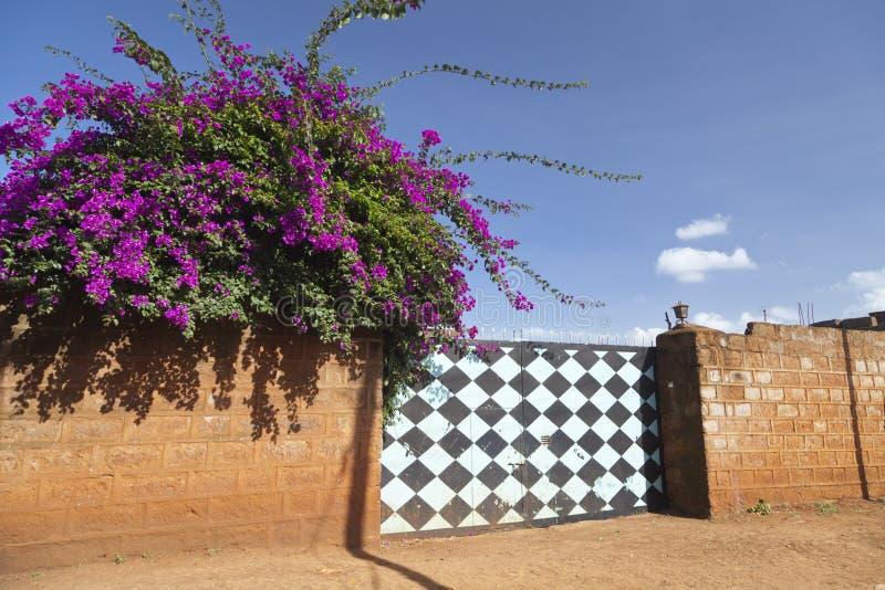 Flores e porta, Kenya imagens de stock royalty free