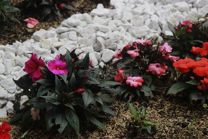 Flores e rochas fotografia de stock royalty free