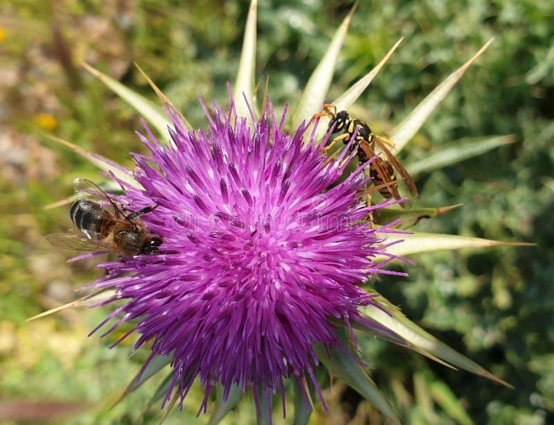 Flores e tipos de abelhas fotografia de stock royalty free