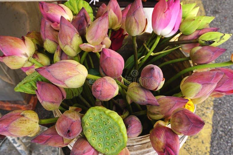 Flores e vagens cor-de-rosa coloridas de lótus em um mercado exterior em 3Sudeste Asiático fotografia de stock