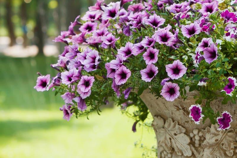 Flores e vaso de pedra no parque fotos de stock