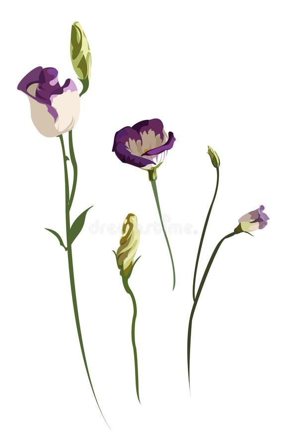 Flores (easter, mola) fotografia de stock royalty free