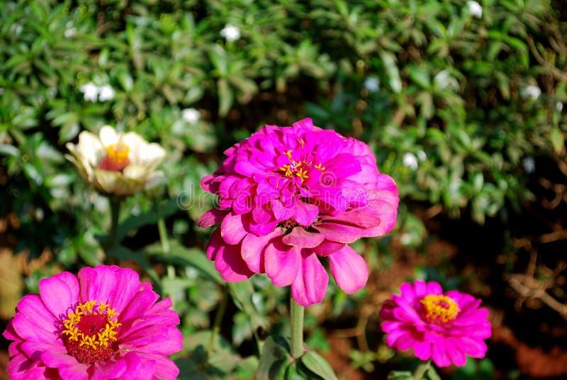 Flores elegantes fotografía de archivo libre de regalías