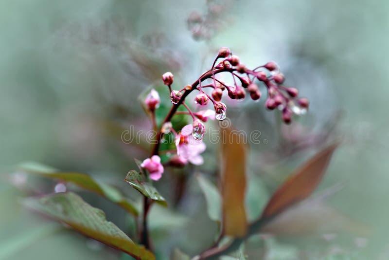 Flores em botão com gotas da água imagem de stock royalty free
