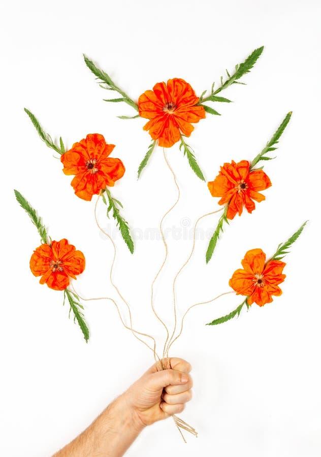 Flores em botão de papoilas vermelhas com as folhas verdes nas cordas que guarda a mão de um homem em um fundo branco foto de stock royalty free