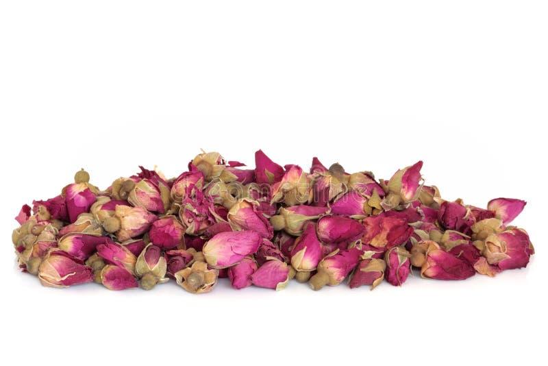 Flores em botão de Rosa fotos de stock royalty free