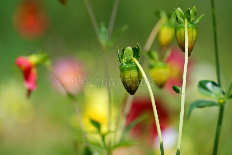 Flores em botão verdes no fundo colorido imagens de stock