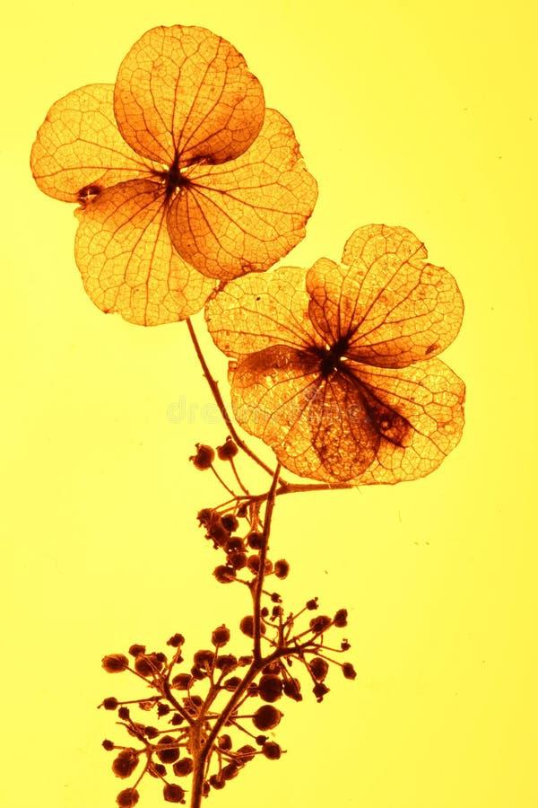 Flores em Bush foto de stock