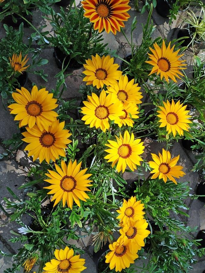 Flores em Floraart em Zagreb, Cro?cia foto de stock royalty free