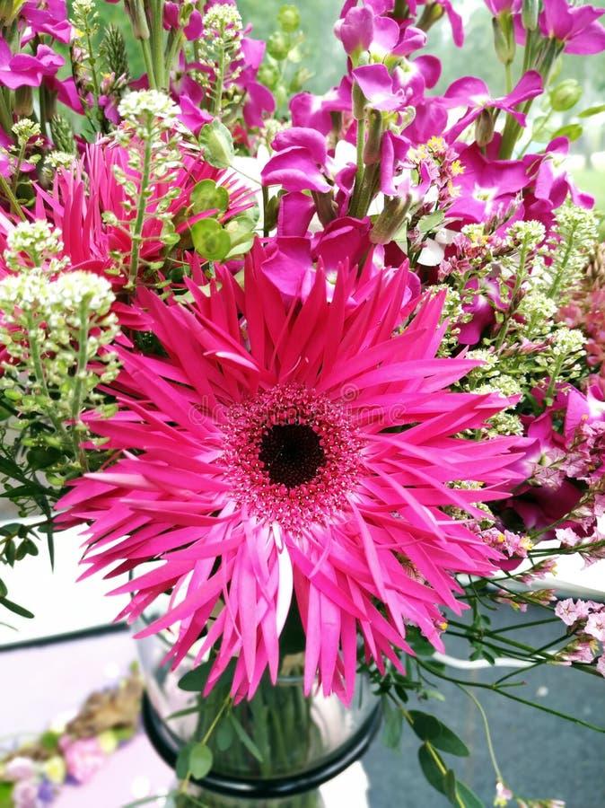 Flores em Floraart em Zagreb, Cro?cia imagem de stock royalty free