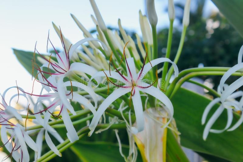 Flores em Havaí imagens de stock royalty free