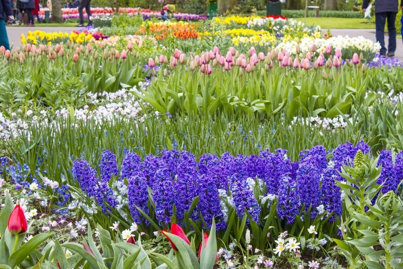 Flores em Keukenhof, Países Baixos imagens de stock royalty free
