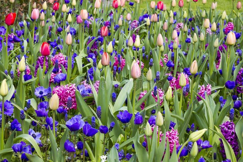 Flores em Keukenhof, Países Baixos fotografia de stock royalty free