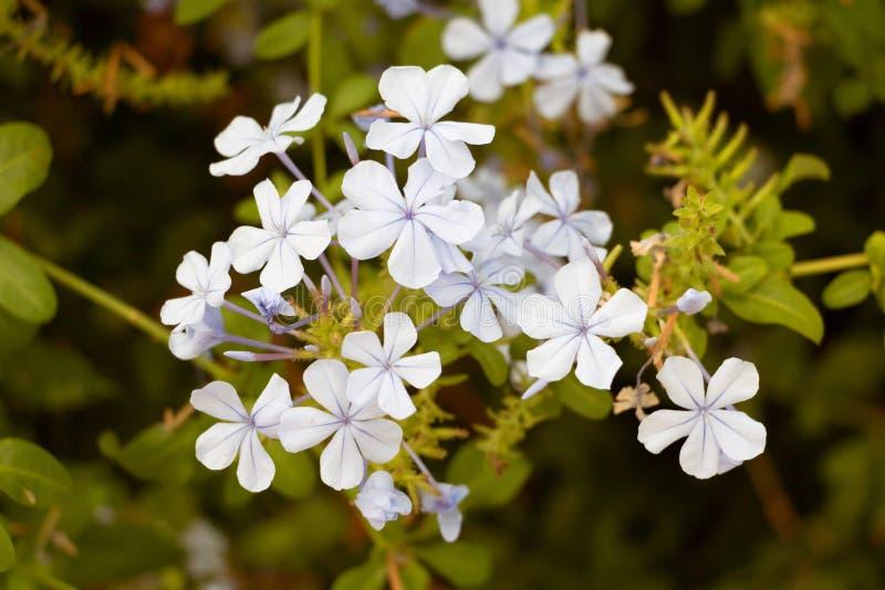 Flores em Madeira foto de stock