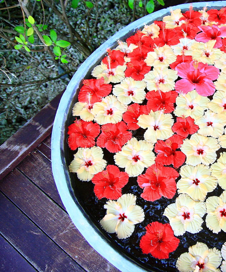 Flores em maldives imagem de stock royalty free