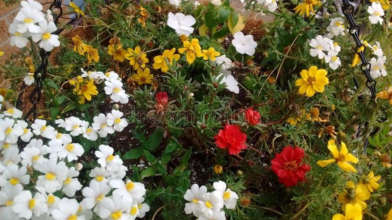 Flores em meu pátio de entrada coberto imagem de stock royalty free