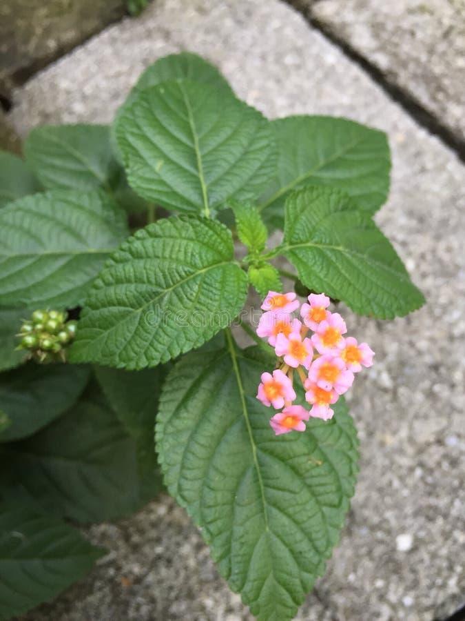 Flores em meu quintal fotos de stock royalty free