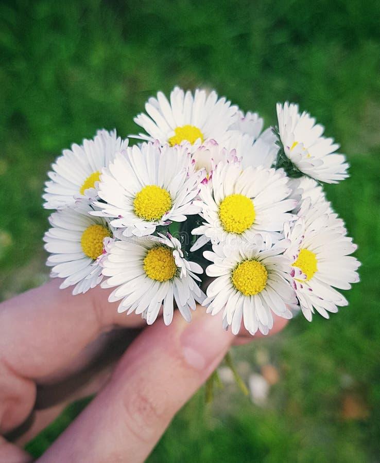 Flores em minha m?o imagens de stock royalty free