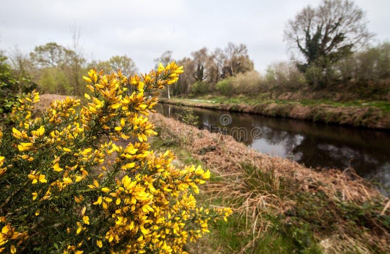 Flores em Shannon Greenway, Irlanda foto de stock