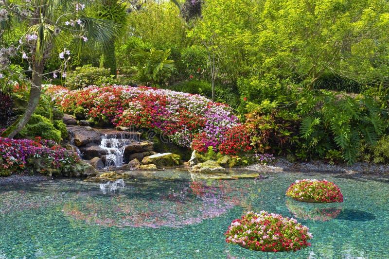 Flores em torno da lagoa fotografia de stock royalty free