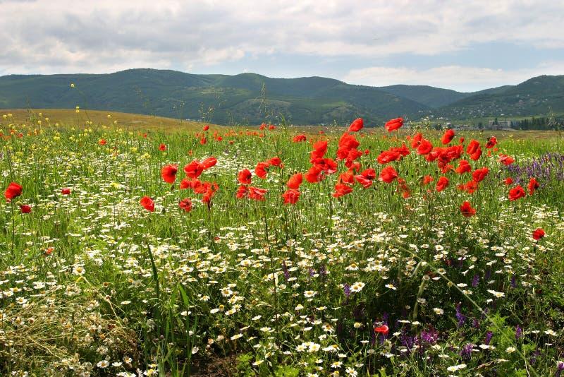 Flores em um campo foto de stock royalty free