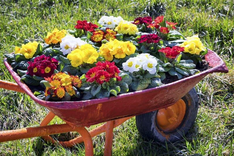 Flores em um carro velho fotos de stock