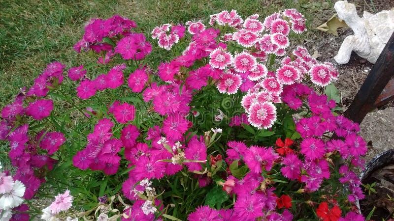 Flores em um potenciômetro de flor em meu jardim da frente fotografia de stock