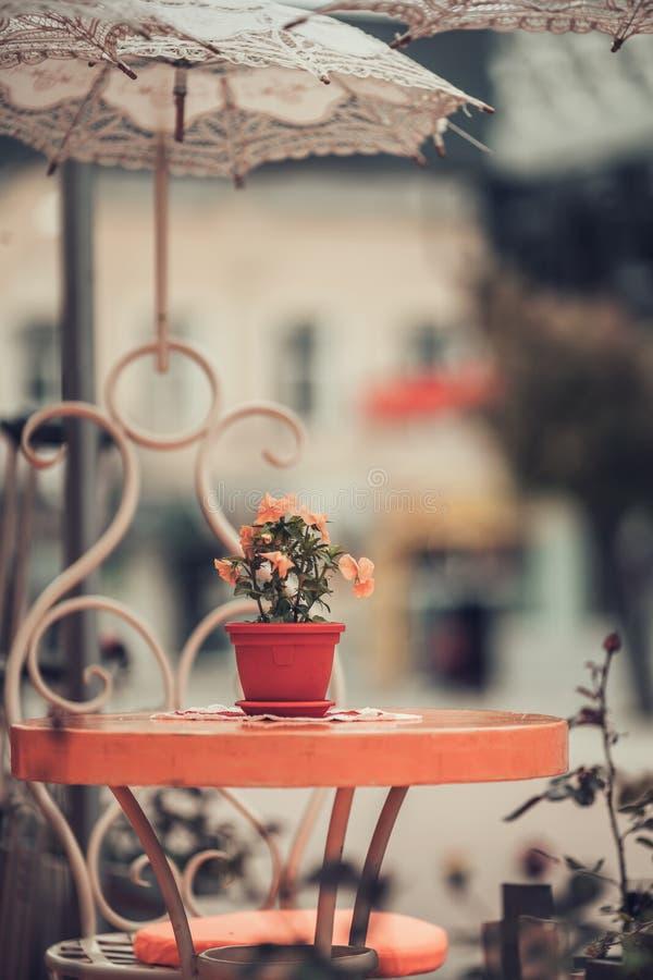 Flores em um potenciômetro na tabela em uma barra do café Exterior da rua foto de stock