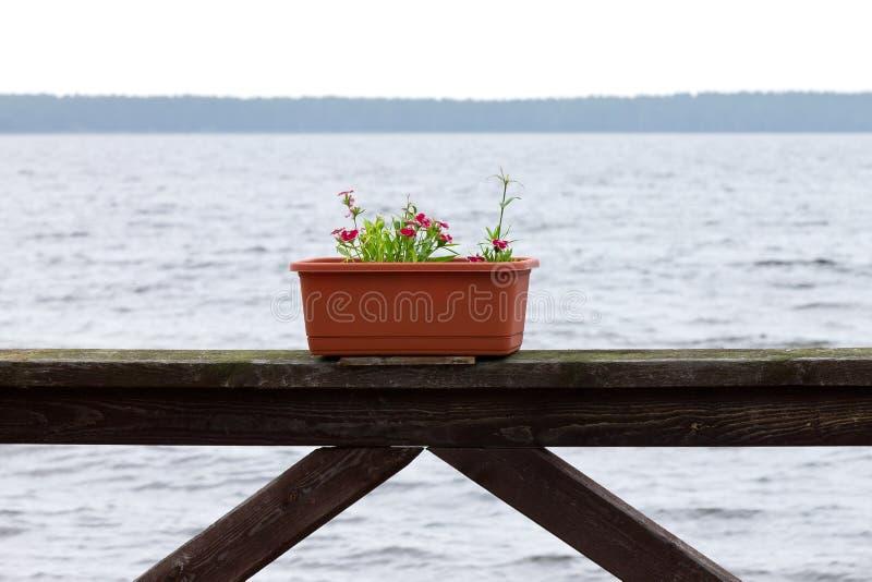 Flores em um potenciômetro sobre o mar imagem de stock