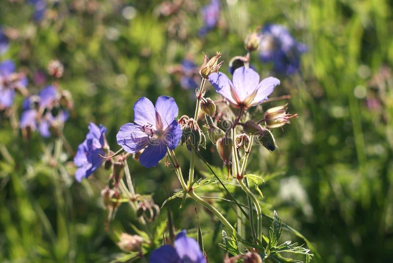 Flores em um prado imagens de stock