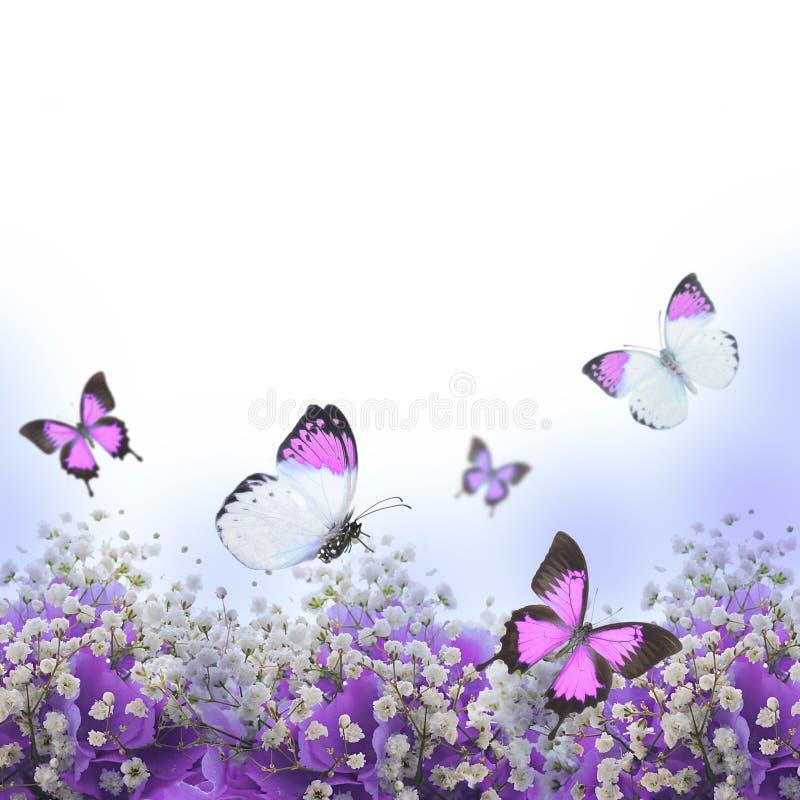 Flores em um ramalhete, hortênsias azuis foto de stock royalty free