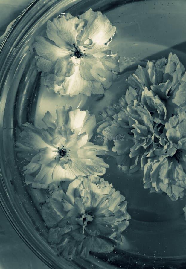 Download Flores Em Uma Bacia De Vidro Com água Imagem de Stock - Imagem de vitality, beleza: 10063389