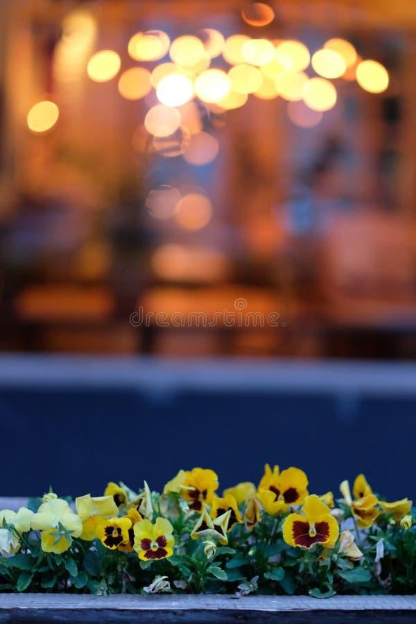Flores em uma caixa sob a janela imagens de stock royalty free