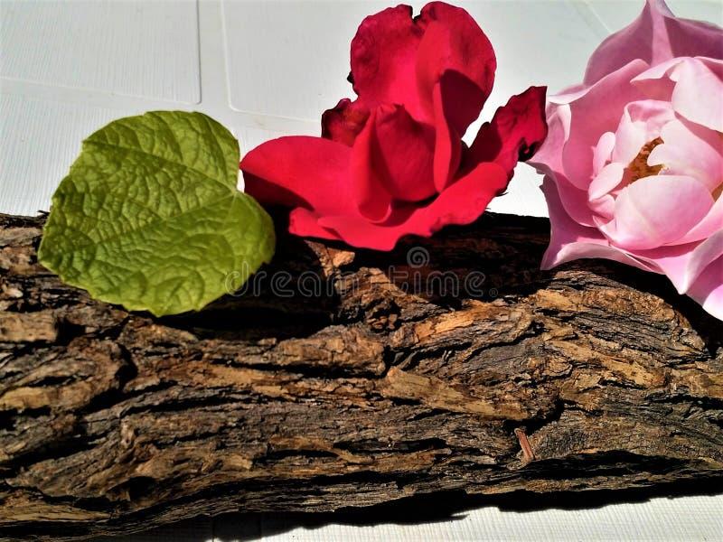 Flores em uma casca de madeira imagens de stock