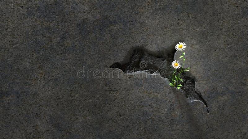Flores em uma parede rachada foto de stock