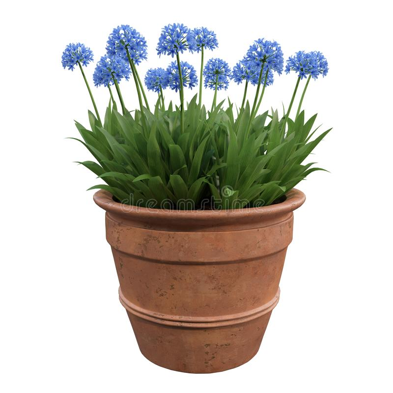Flores em uns potenciômetros foto de stock royalty free